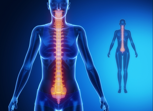 lumbardisc-back-chiropractor-posture-spineandhealth