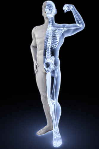skeleton-bones-chiropractor-spineandhealth-sydney-crowsnest-northsydney